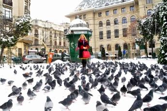mioara barsan si porumbeii iubirii